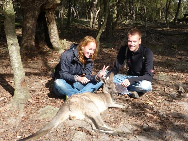 Even ten noorden van Sydney ligt het Australia Walkabout Wildlife Park waar je 'up close & personal' kunt kennismaken met kangaroes, koala's en emoe's. Onze eerste kangaroe - check!
