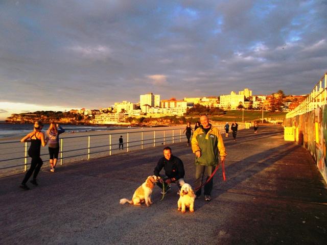 Vroeg op, om met zonsopkomst de hondjes uit te laten bij Bondi Beach. Nee, we waren niet de enigen, in Sydney is iedereen sportief!