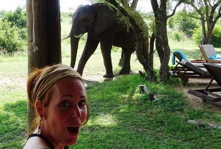 Safari Krugerpark of prive-reservaat? Dit zijn de verschillen.