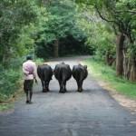 Sigiriya_Sri_Lanka_kosten_visum