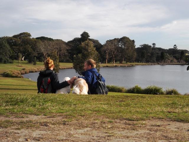 Wandelen (met hondjes) kan uitstekend in Sydney. Alhoewel het een grote stad is, is het ruim opgezet met veel parken.