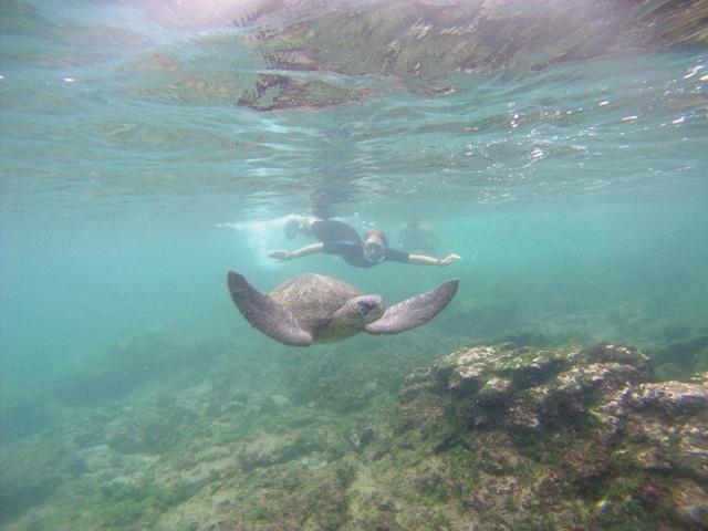 Snorkelen met schildpadden (Sullivan Bay - Santiago, Galapagos)
