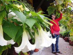 Prachtige bloemen rondom de Herbal House, met op de achtergrond Vesna, de super leuke eigenaresse.
