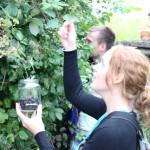 Herbal House, Slovenie: fruit plukken met locals