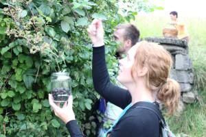 Herbal House, Slovenie: fruit plukken met locals