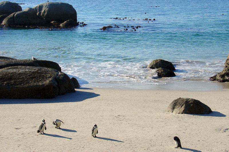 main_25-pinguins