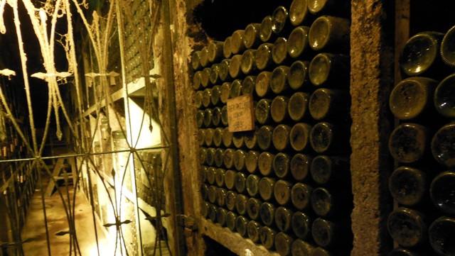 Wijnproeven in de oudste wijnkelder van Slovenie: Ptujska Klet in Ptuj