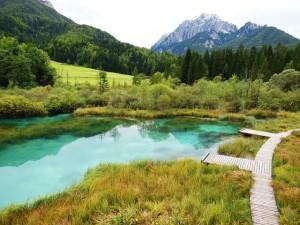 Het fel turquoise Lake Zelenci, Slovenie