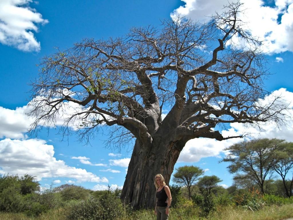 tanzania-reis-savanne-baobab-boom-