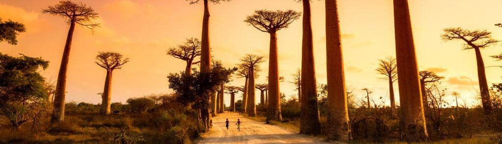 De Baobab bomen in Madagaskar