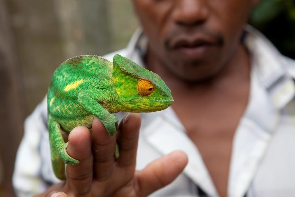 Wild spotten met een lokale gids op Madagaskar