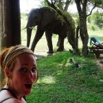Safari prive-reservaat Zuid-Afrika: olifanten bij het zwembad