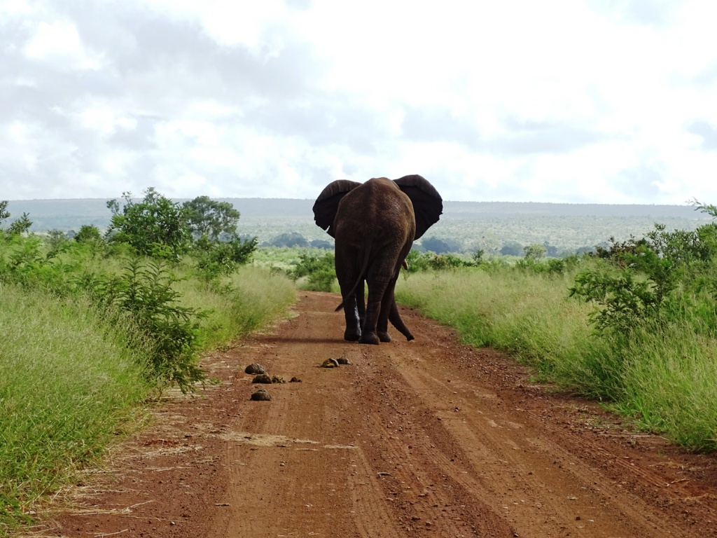 Safari Krugerpark Zuid-Afrika: olifant offroad spotten