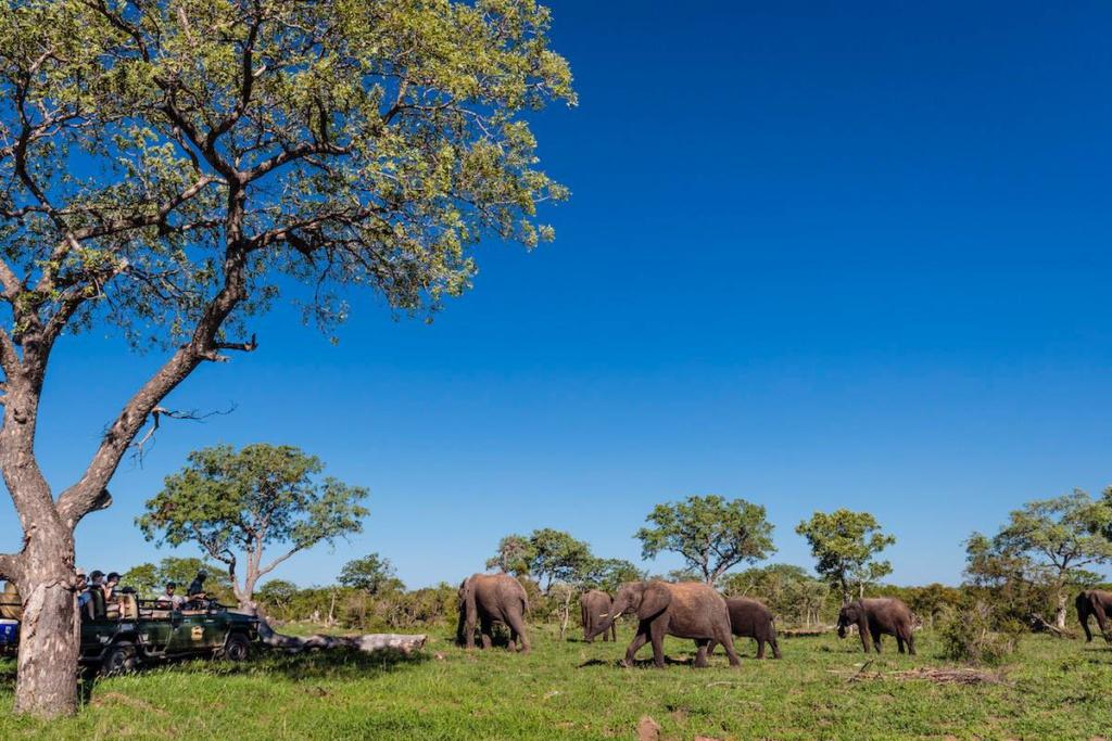 Grote kuddes olifanten tijdens safari Timbavati Private Game Reserve, Zuid-Afrika