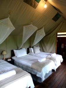 Slapen in een safaritent bij Shindzela Tented Camp in Timbavati, Zuid-Afrika