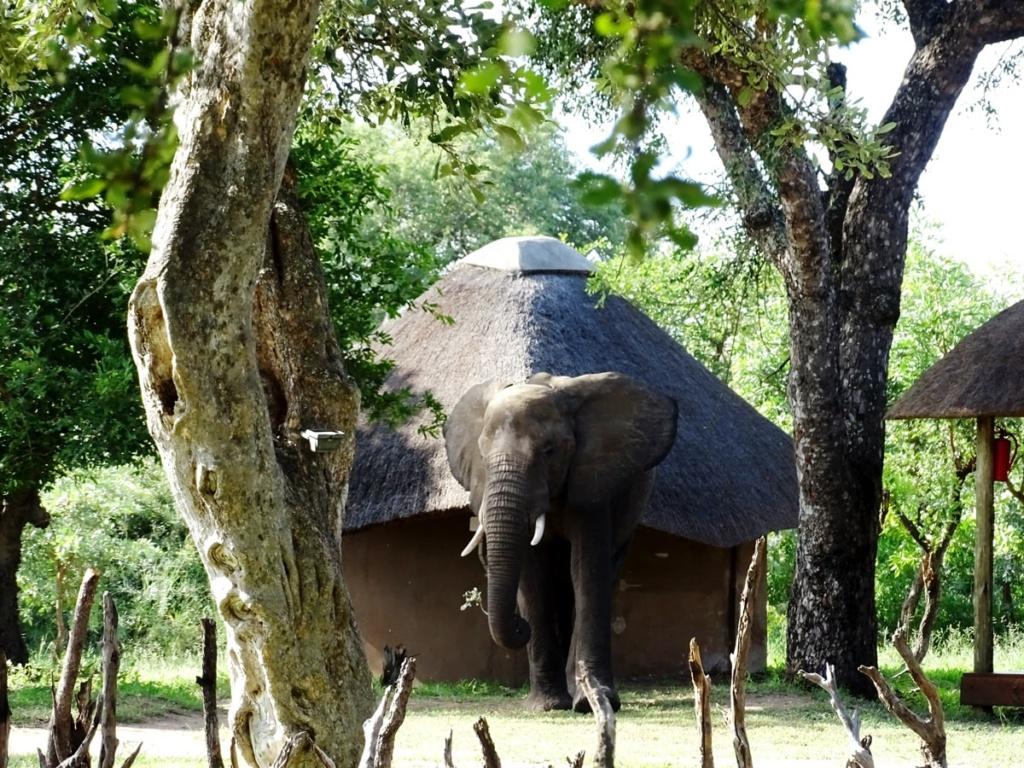 Olifanten bij Shindzela Tented Camp in Timbavati, Zuid-Afrika