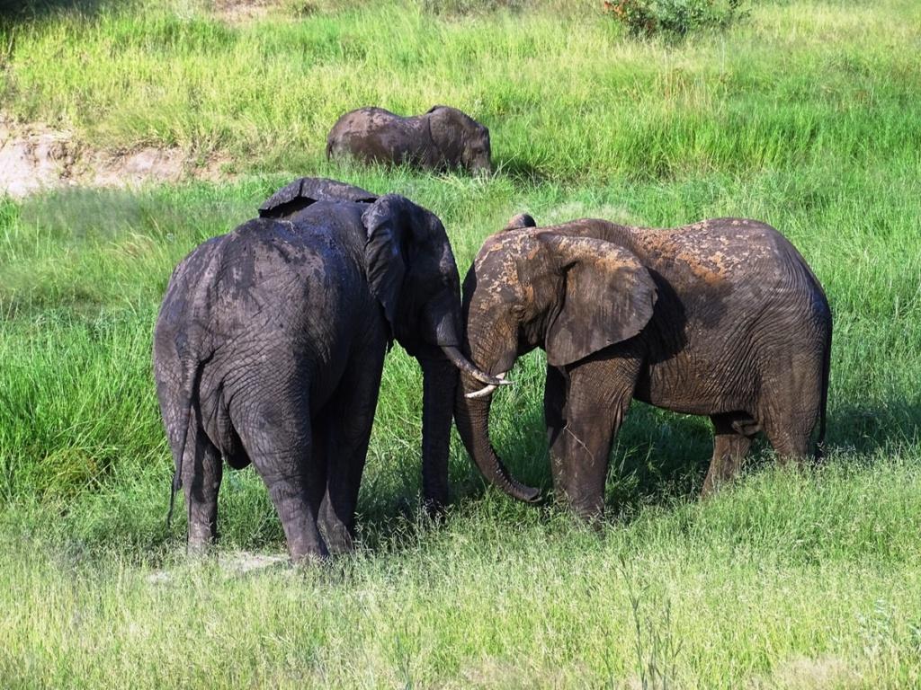 Knuffelende olifanten met een baby | Safari Timbavati Private Game Reserve, Zuid-Afrika