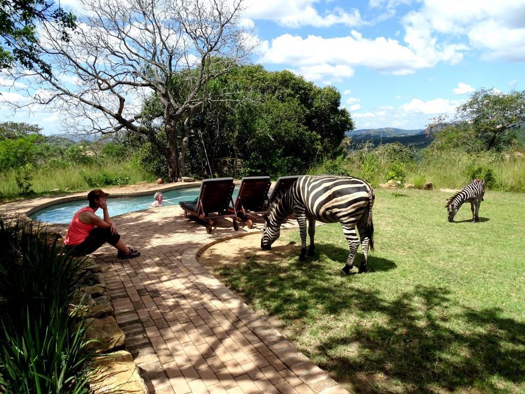 Zebra's in de tuin van onze bush lodge @Tomjachu Bush Retreat, Nelspruit (Zuid-Afrika rondreis tip!)
