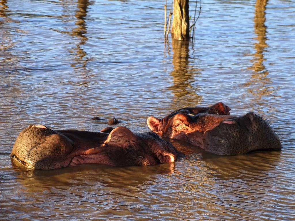 Hippo (nijlpaarden) cruise in St. Lucia (Zuid-Afrika rondreis tip!)