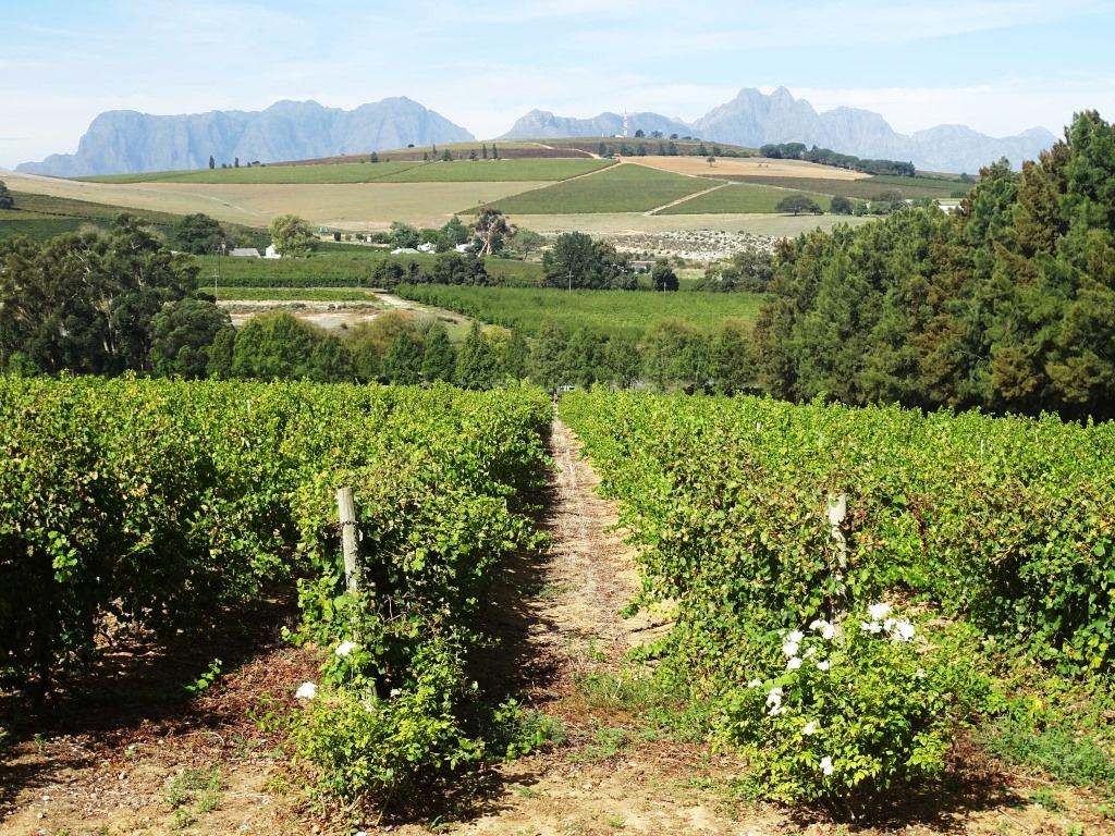 Eten en wijnproeven met uitzicht op de wereldberoemde wijnranken van Stellenbosch (Zuid-Afrika rondreis tip!)