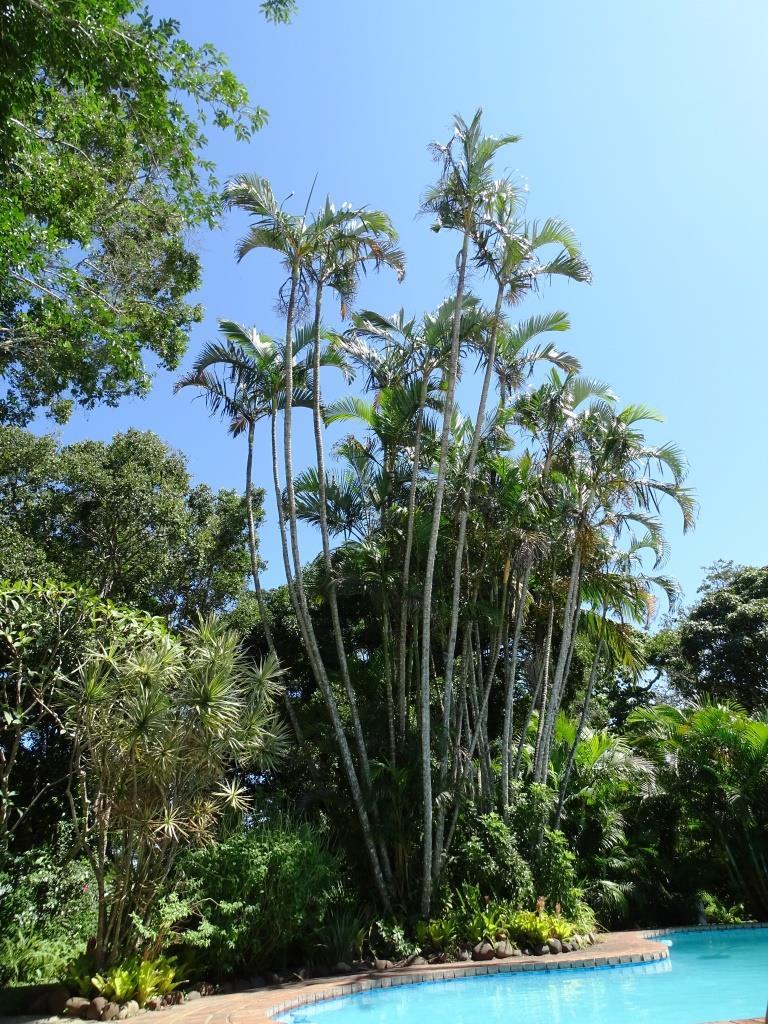 Palmbomen aan het zwembad bij Kingfisher Lodge, St. Lucia (Zuid Afrika accommodatie tip!)