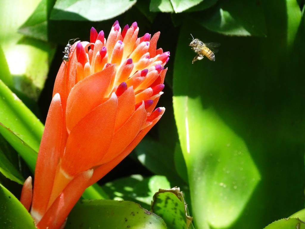 Prachtige bloemen bij Kingfisher Lodge, St. Lucia (Zuid Afrika accommodatie tip!)