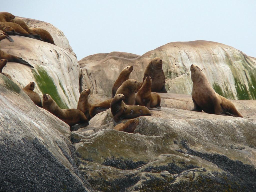 Alaska cruise: spot zeeleeuwen tijdens een cruise naar Glacier Bay (Alaska vakantie tip!)